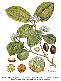 Nux vomica homeopatia itsehoito